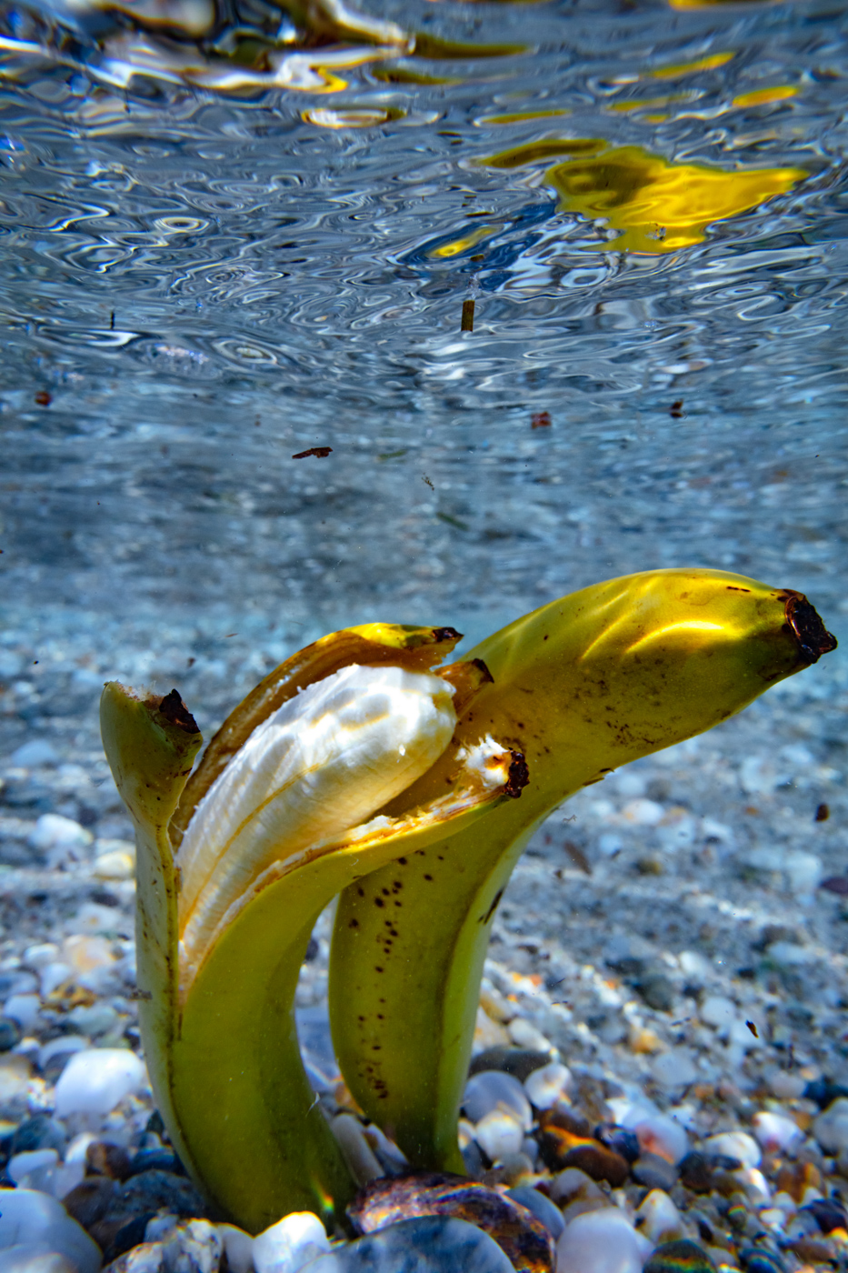 Bananas on the bottom of the ocean
