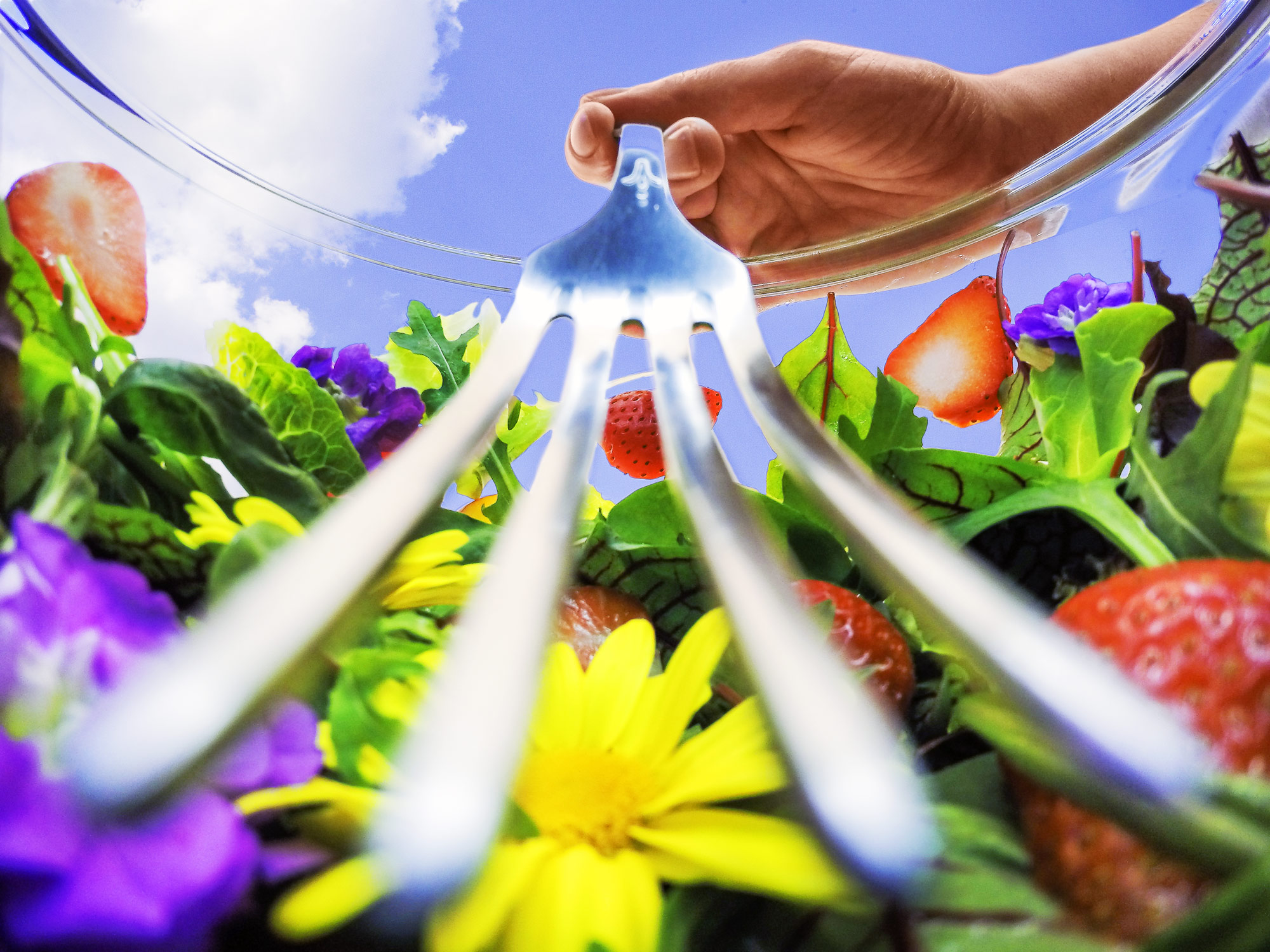 Inside food photo series, depicting a close up view of a summer salad with greens, flowers and strawberries. Seeing a gigantic fork coming right at you.